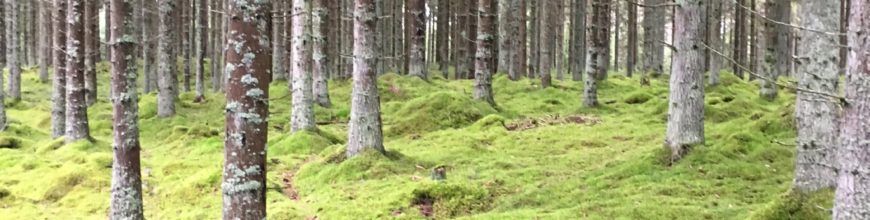 Skogsbad och kalla bad – när det naturliga blir trend